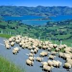 ニュージーランドトロフィー2021の予想を公開!