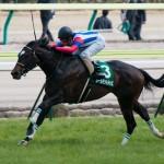 福島牝馬S2017の予想を公開!
